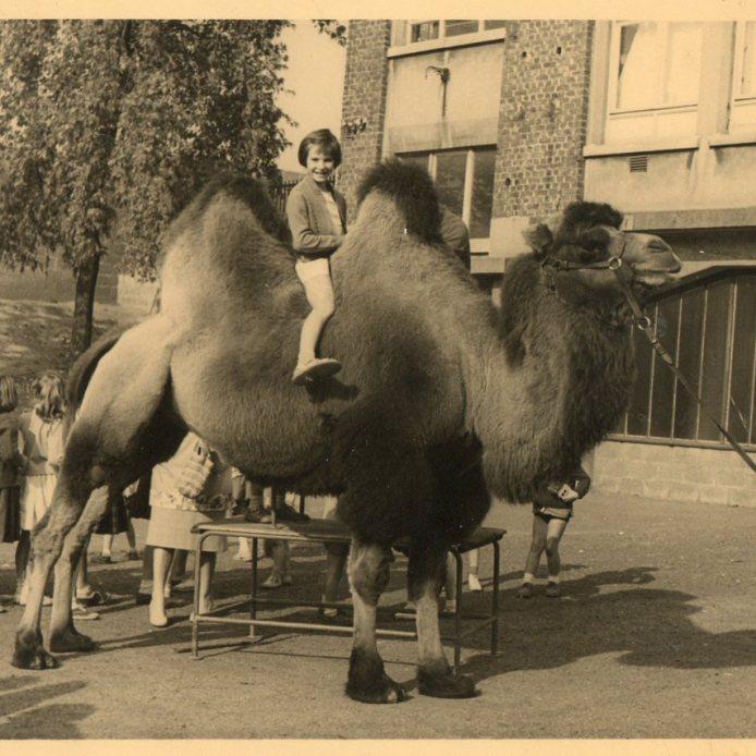 rachel sur le chameau