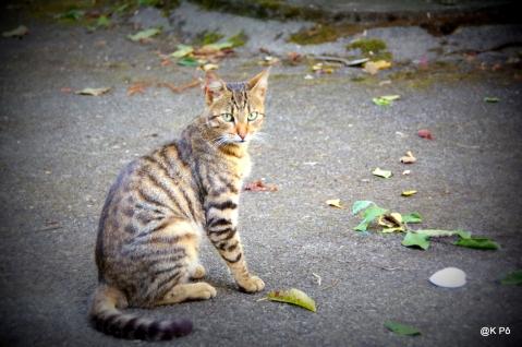 Le Tigre (Rahou!)