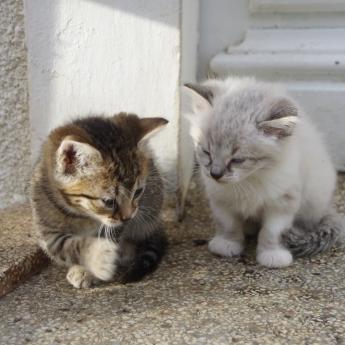 """""""tu crois qu'on peut entrer?"""" deux petits sur trois!"""