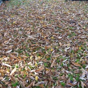 foule sentimentale d'automne