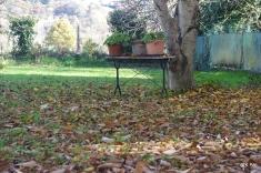 l'estrade aux pots de géraniums