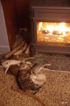 se prélassant auprès du feu
