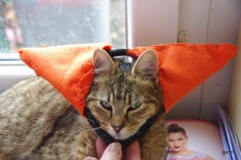 Rouquinou grandes oreilles