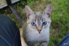 Grassouillette aux yeux bleus