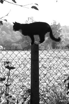 Patachon, black en white