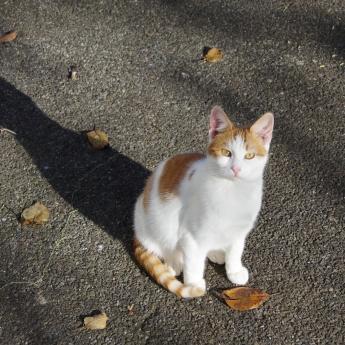 chat roux d'automne