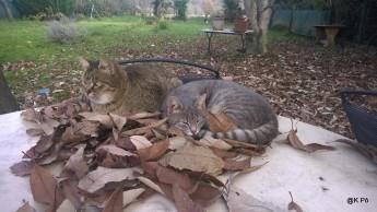 Grisette et Rouquinou sur la table de jardin
