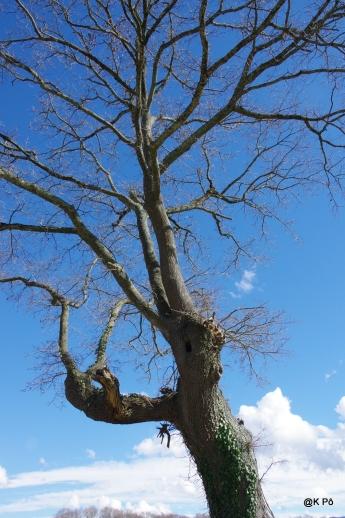 les arbres vous observent